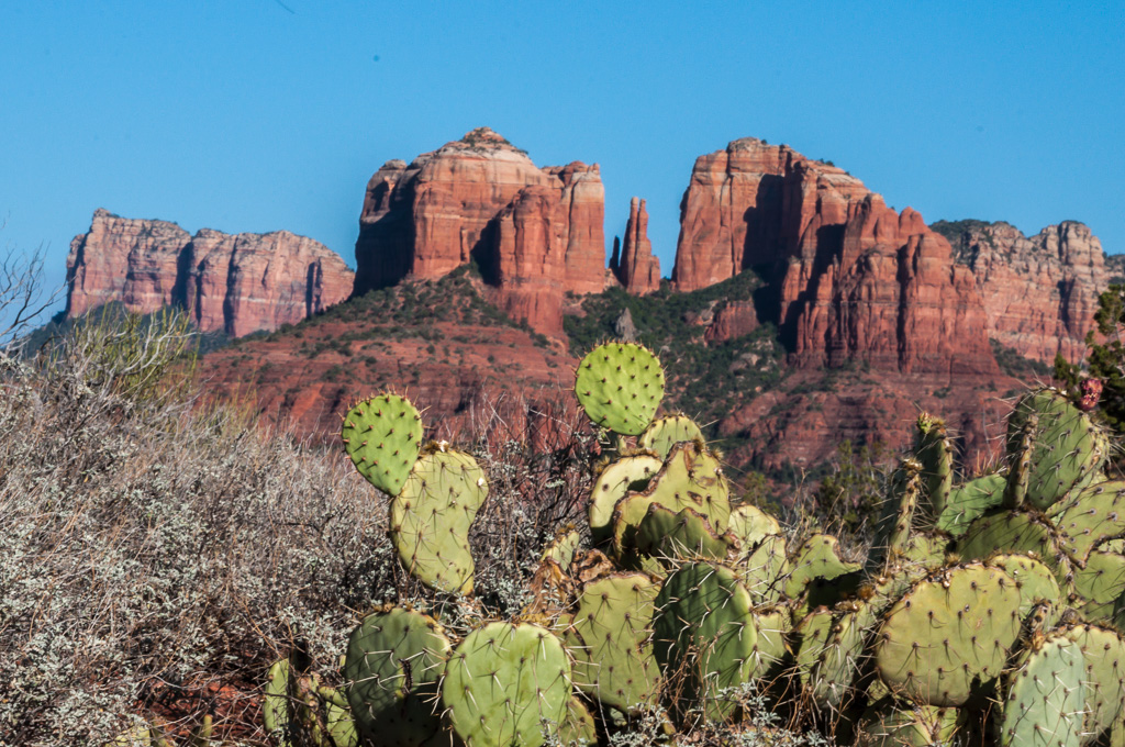 Travel Trip Photo: View of Cathedral Rock, with a Prickly Pear Cactus in the foreground and Courthouse Butte in the background, Sedona, Arizona