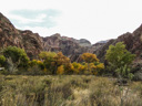 Travel Trip Photo: Fall color & South Rim inner gorge from Phantom Ranch