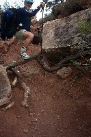 Grand Canyon Hike Photo: Brian subdues the nasty tree root
