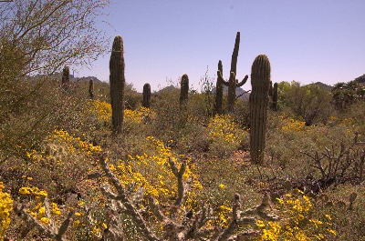 Travel Trip Photo: Desert bloom at Sonoran Desert Museum, Tuscon, Arizona