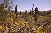 Travel Trip: Desert bloom, Sonoran Desert Museum, Tuscon, Arizona